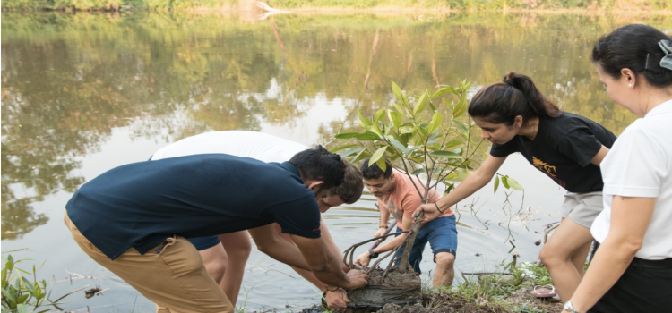 Tree Planting (August 2019)